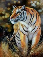 The Female Tiger