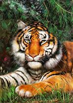 The Lying Tiger