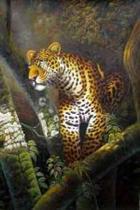 Wild Cats - 0011