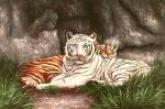 Wild Cats - 0012