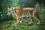 Wild Cats - 0013