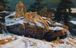 Wild Cats - 0015