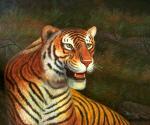 Wild Cats - 0019