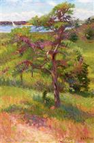 Tree by an Inlet, Cape Cod