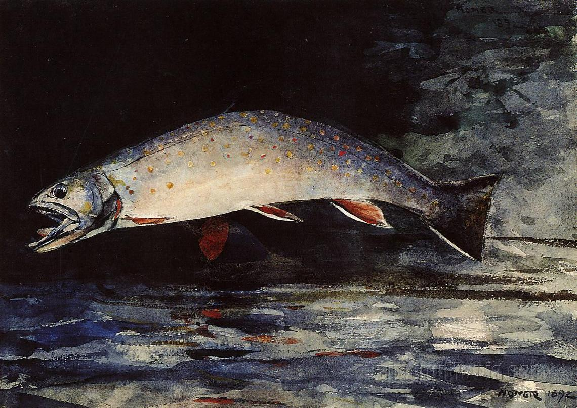 A Brook Trout