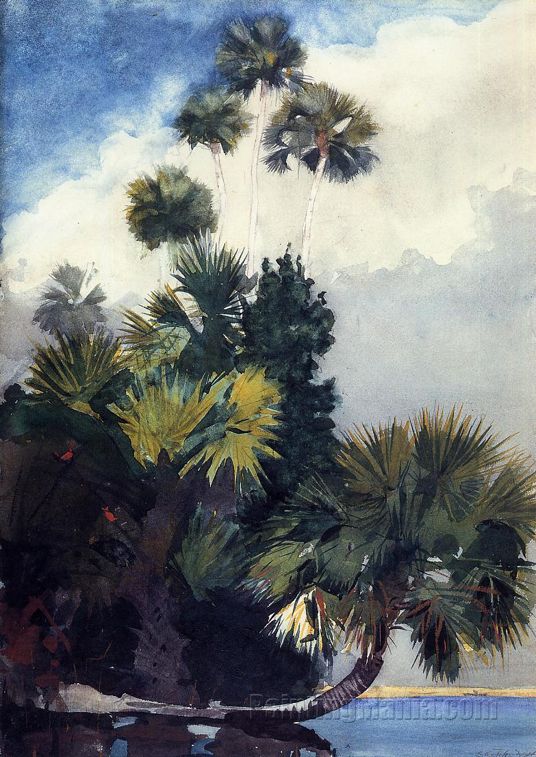Palm trees florida winslow homer paintings for Painting palm trees