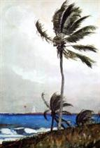 Palm Tree, Nassau